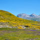 Beautiful landscape with colorful flowers in the Ordesa y Monte Perdido National Park - PhotoDune Item for Sale