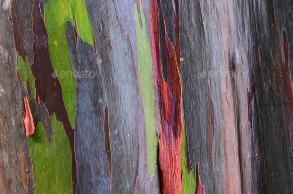 Background of the natural colorful tree trunk - Stock Photo - Images