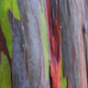 Background of the natural colorful tree trunk - PhotoDune Item for Sale