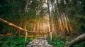 Tatra National Park, Poland. Hiking Trails In Summer Tatra Mountains Landscape - PhotoDune Item for Sale