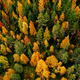 Aerial top view of  yellow and orange autumn trees in forest in rural Finland. - PhotoDune Item for Sale