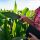 Middle aged caucasian female farm worker with tablet inspecting maize stalks at field - PhotoDune Item for Sale