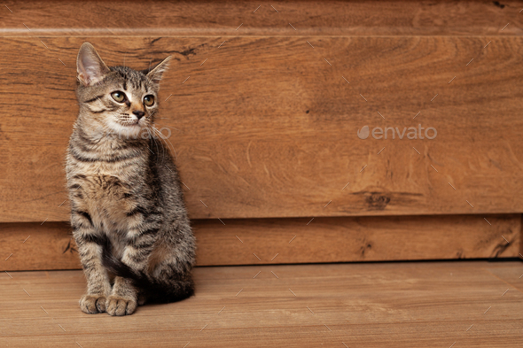 Young gray striped kitten on a wooden background - Stock Photo - Images