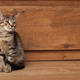 Young gray striped kitten on a wooden background - PhotoDune Item for Sale