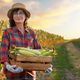 Female caucasian farm worker holds wooden crate with corn cobs with maize field at background - PhotoDune Item for Sale