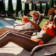 Girlfriends drink coctails on sun beds at pool - PhotoDune Item for Sale