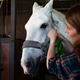 Woman prepare horse for riding, making braid in stable - PhotoDune Item for Sale