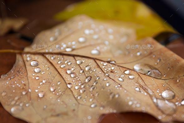 Autumn leaf - Stock Photo - Images