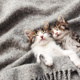 Two little kittens sleep with their eyes closed and covered with fluffy blanket - PhotoDune Item for Sale