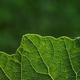 close up of green leaf - PhotoDune Item for Sale