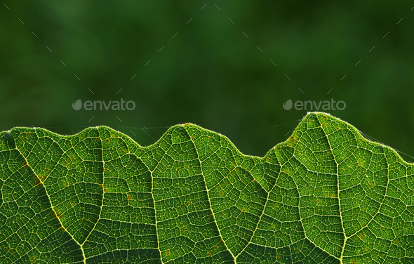 close up of green leaf - Stock Photo - Images