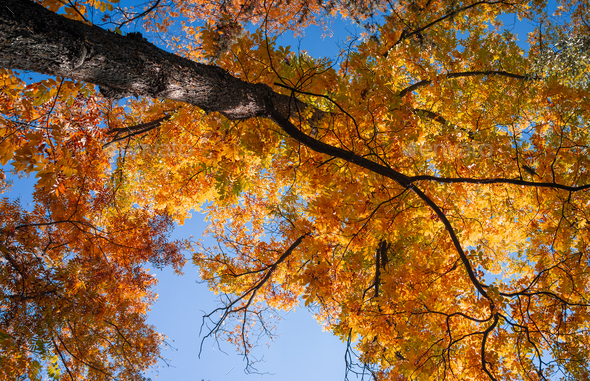 Big Autumn Tree - Stock Photo - Images