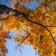 Big Autumn Tree - PhotoDune Item for Sale