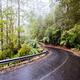 Beech Forest Landscape in Australia - PhotoDune Item for Sale