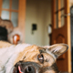 Bored Dog Is Lying On Floor Of A House. Funny Portrait Of A Pet - PhotoDune Item for Sale