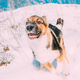 Puppy Of Mixed Breed Dog Playing In Snowy Forest In Winter Day - PhotoDune Item for Sale