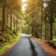 Wet asphalt forest road against the sun. - PhotoDune Item for Sale