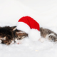Two Christmas kittens in red Santa hat and bow sleep with eyes closed - PhotoDune Item for Sale