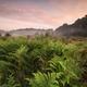 green fern in fog at summer sunrise - PhotoDune Item for Sale