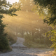 morning sunbeams over path in forest - PhotoDune Item for Sale