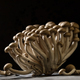 bunch of mushrooms on black background - PhotoDune Item for Sale