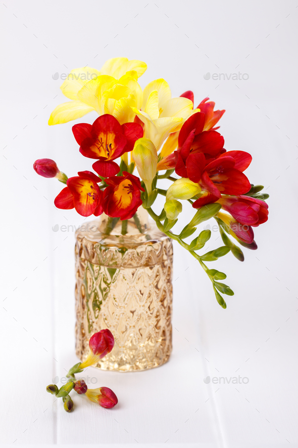 Yellow and red freesias - Stock Photo - Images