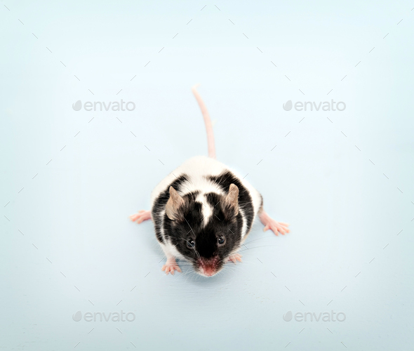 Small cute mouse - Stock Photo - Images