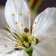 spring flower - PhotoDune Item for Sale