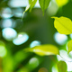 Close up of house plant branch with leaves in sunlight - PhotoDune Item for Sale