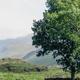Village road in Lake District National Park - PhotoDune Item for Sale