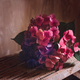 Bunch of colorful hydrangeas - PhotoDune Item for Sale