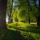 Beautiful path among the trees - PhotoDune Item for Sale