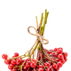 viburnum - PhotoDune Item for Sale