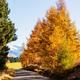 Autumn in New Zealand - PhotoDune Item for Sale