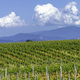 Vineyards of Monferrato near Gavi at springtime - PhotoDune Item for Sale