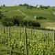 Vineyards of Monferrato near Nizza at springtime - PhotoDune Item for Sale