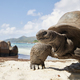 Giant tortoise on beach - PhotoDune Item for Sale