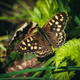 Close-Up Of Butterfly On Leaf - PhotoDune Item for Sale