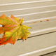 Fall  leaf on the wooden background - PhotoDune Item for Sale