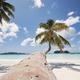Palm tree on white sand beach - PhotoDune Item for Sale