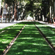Tramcar rail tracks with green lawn - PhotoDune Item for Sale