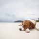 Cute dog sleeping on sand beach - PhotoDune Item for Sale