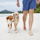 Man walking with dog on beach - PhotoDune Item for Sale