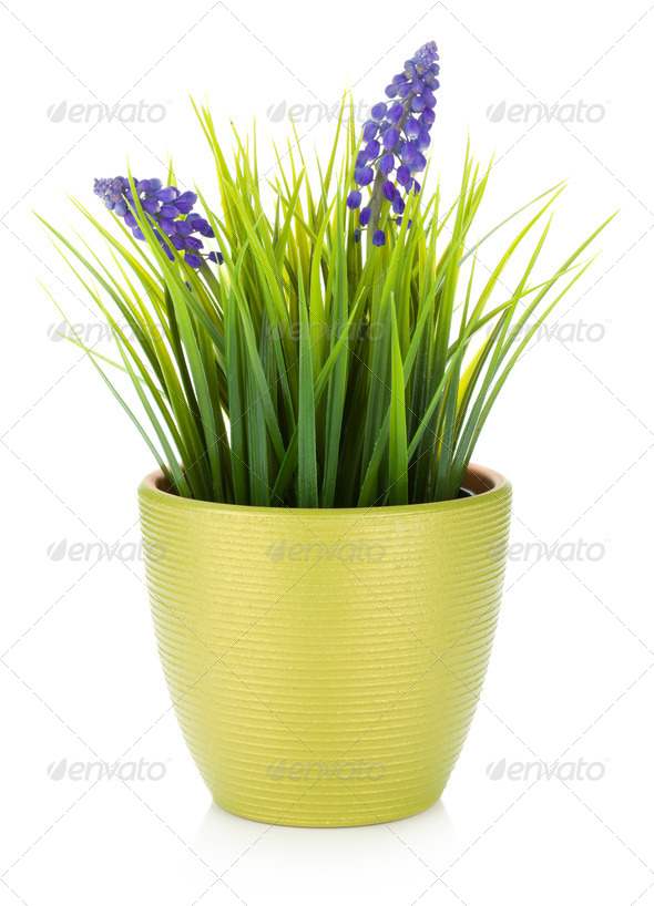 Decorative flower in flowerpot - Stock Photo - Images