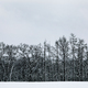 Black and white winter snow forest landscape - PhotoDune Item for Sale