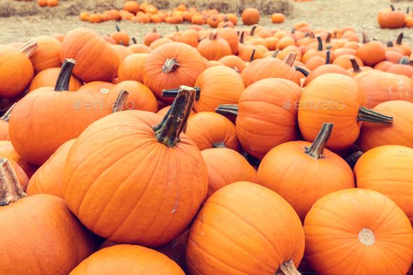 Halloween pumpkins background. - Stock Photo - Images