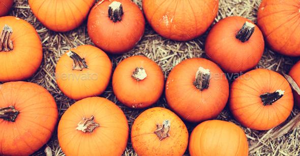 Halloween pumpkins on hay. - Stock Photo - Images