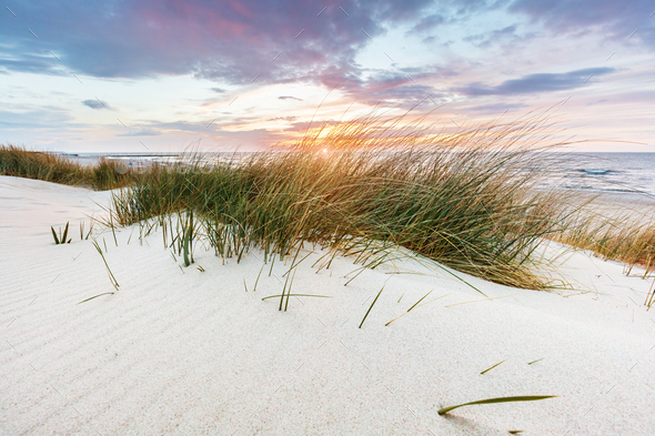 Beach grass on dune, Baltic sea at sunset - Stock Photo - Images