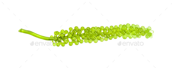 Sea grapes ( green caviar ) seaweed on white - Stock Photo - Images