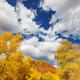 Autumn road - PhotoDune Item for Sale
